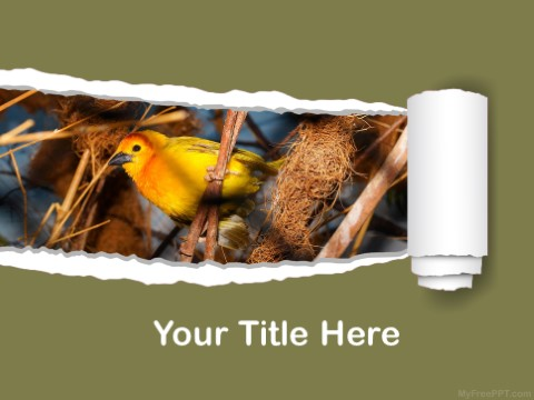 Free Sparrow PPT Template