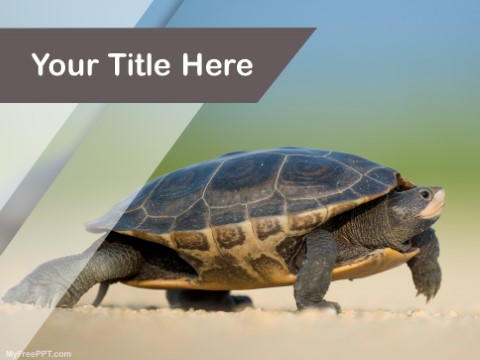 Free Turtle PPT Template