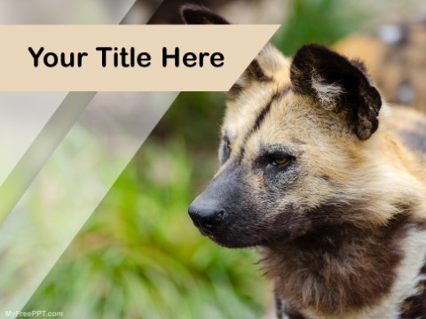 Free Wild Dog PPT Template