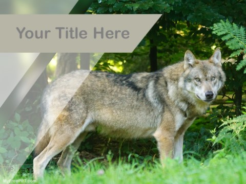 Free Wolf PPT Template