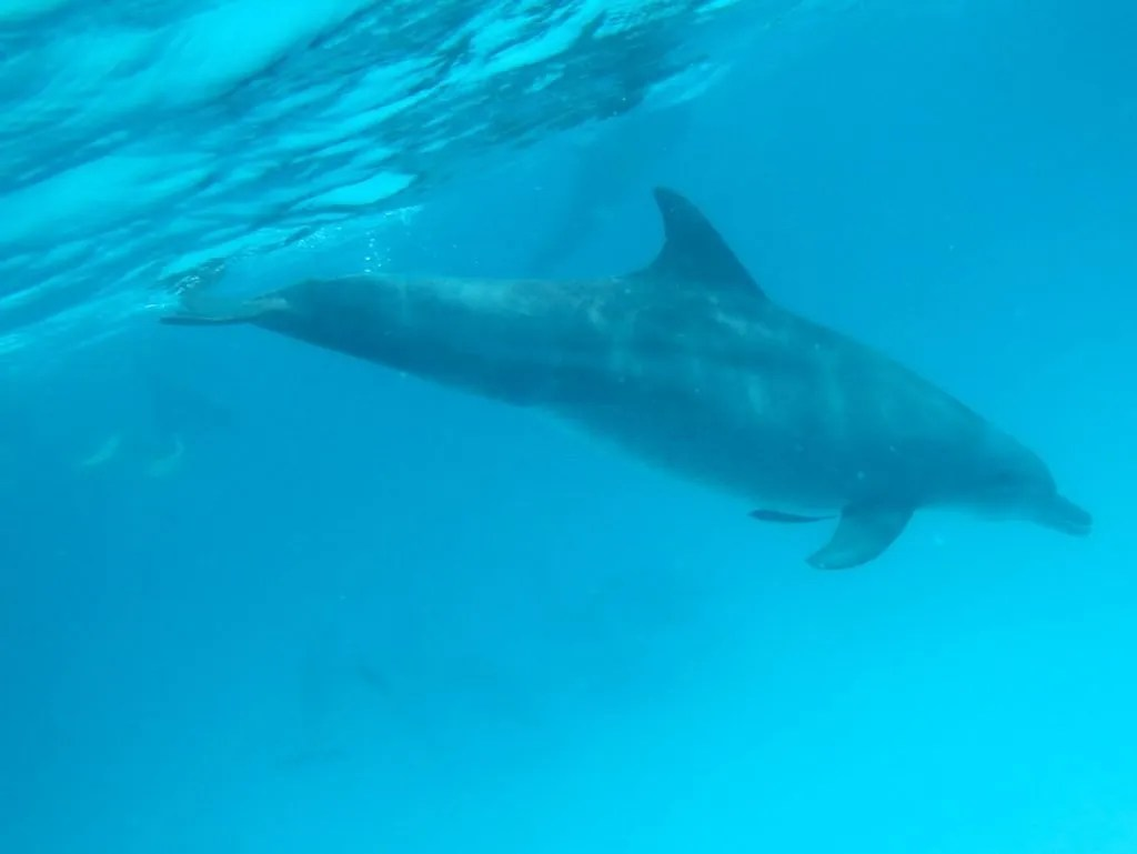 Dolphin tour and swimming near Mnemba Island in Zanzibar.