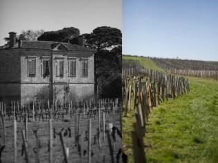 French-vineyard-bordeaux