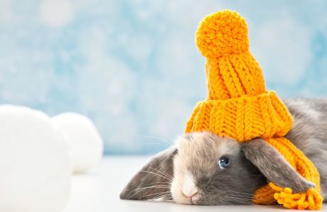 How to Keep Rabbit Warm in Winter