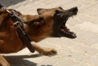 Symptoms of Rabies in Dogs