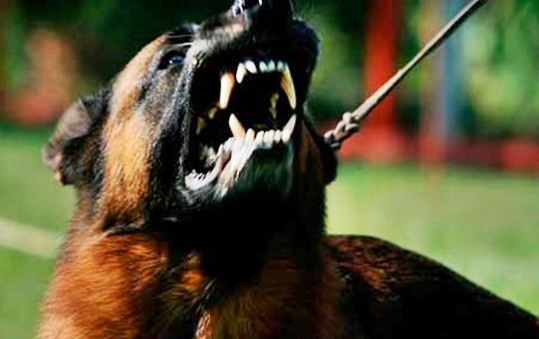 Symptoms of Rabies in Dogs and Treatment