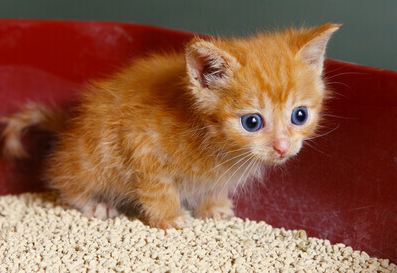 How Often should you Change Cat Litter
