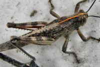 How to Remove Grasshoppers from Plants