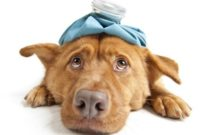 How to Tell if My Dog has a Fever
