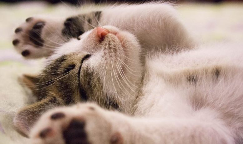 How Many Hours does a Kitten Sleep