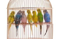 How to Choose The Ideal Cage for Your Parakeet