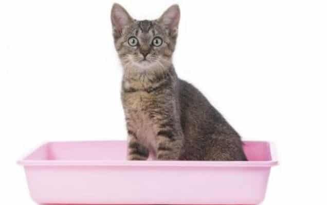 How to Control The Smell of Your Kitten's Litter Box