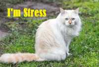 How to Identify a Stressed Cat