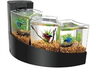 How to Take Care of Betta Fish 1