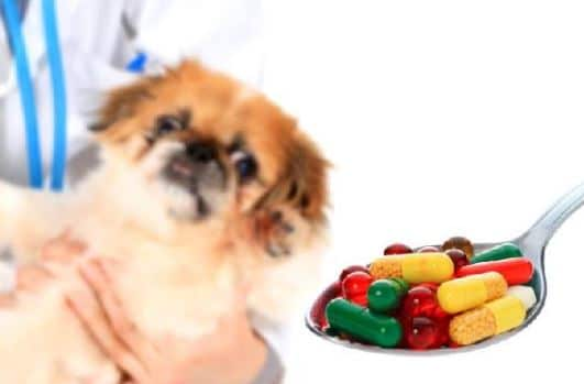 How to Give Pills to Puppies