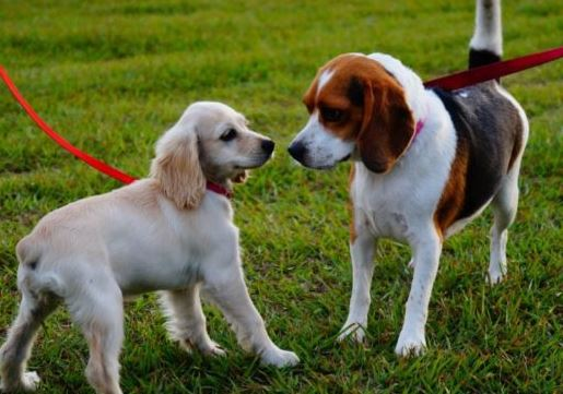 How to Socialize Intolerant Dogs with Other Animals