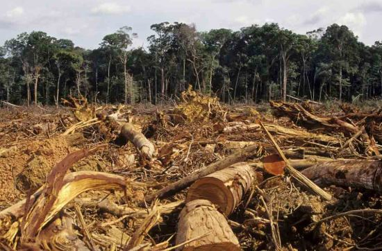 What Effect of Deforestation