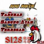 AduJoker☯S128•Sabung Ayam•Judi S1288•Agen S1288•Adu Ayam•Login S128•Agen Sv388•S1288•Sabung Ayam Live