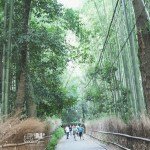 [JAPAN] Refreshing Walk at Arashiyama Bamboo Grove in Kyoto, Japan