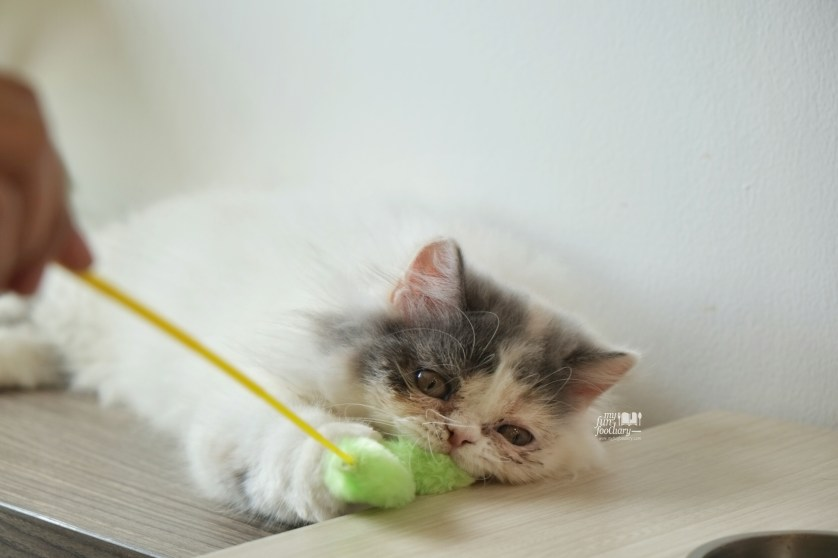 Jolie at Cutie Cats Cafe by Myfunfoodiary