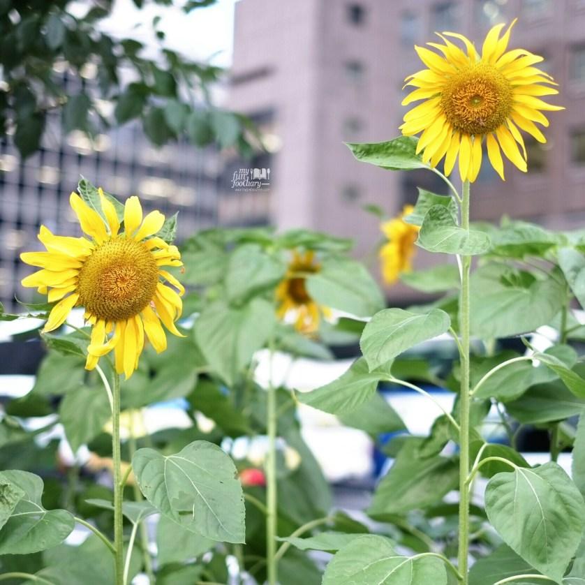 Beautiful Sunflower at Ginza Tokyo by Myfunfoodiary