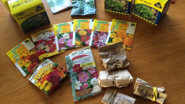 種まき用ペレットを使って種まきをしました