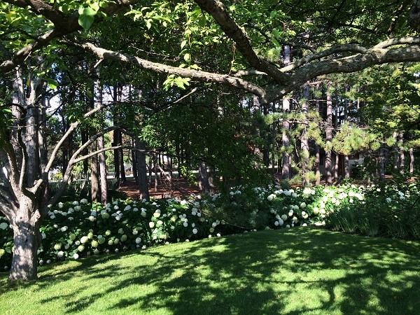 モントリオール植物園、日本式庭園、あじさい