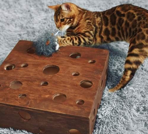 развивающая игрушка для котят