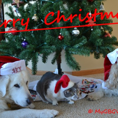 Merry Christmas | GBGV