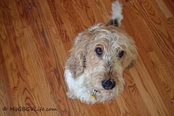 begging wet dog