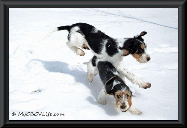 flying puppy framed