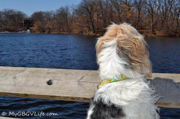 Hey, look! The ice is almost all gone on the lake, can I go swimming?
