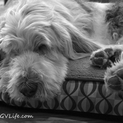 Snoozin' | GBGV | Black and White Sunday
