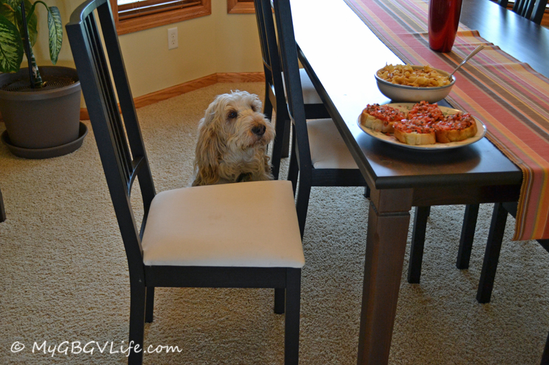 Just waiting patiently for mom to come and eat her dinner, no I don't want any!