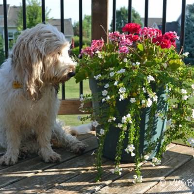 Ahhh The Flowers | GBGV | See Beautiful