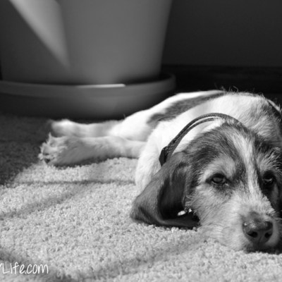 Puppy Thought | GBGV | Black and White Sunday