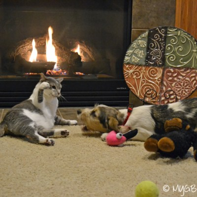 Fireplace Wars | GBGV | Wordless Wednesday