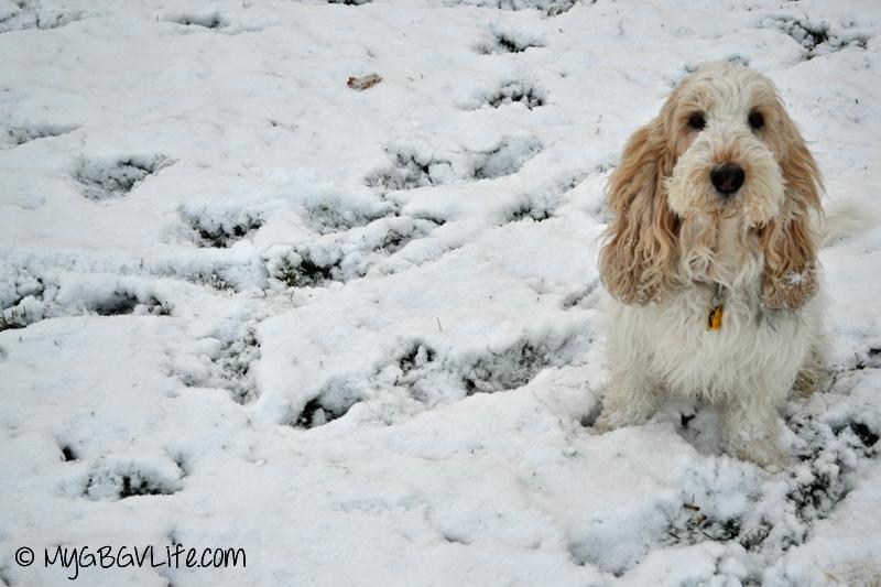 My GBGV Life first snow 2013