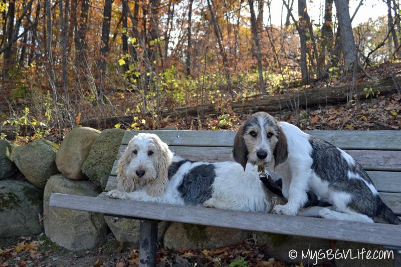 My GBGV Life Emma and Bailie resting