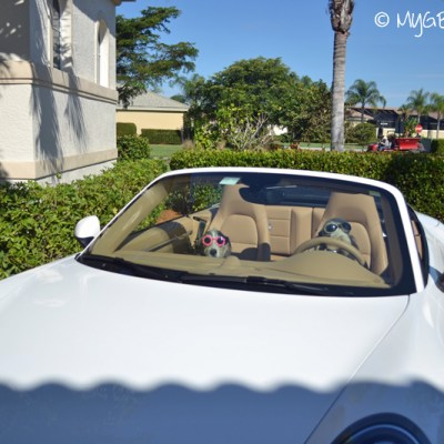 Who Wants To Ride Along To The Beach? | GBGV | Wordless Wednesday