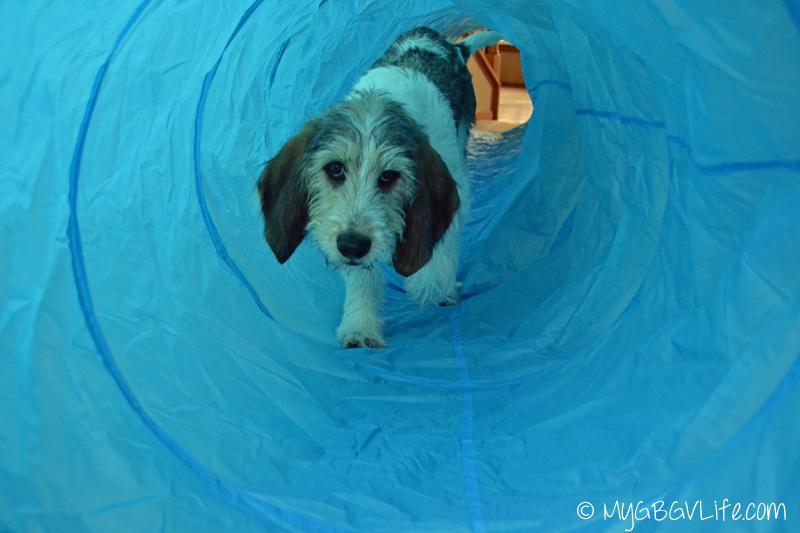 My GBGV Life Bailie in tunnel