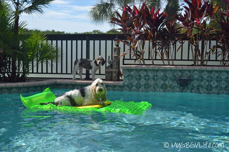 My GBGV Life pool time