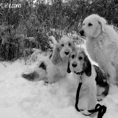 Winter Wonderland | GBGV | Black and White Sunday