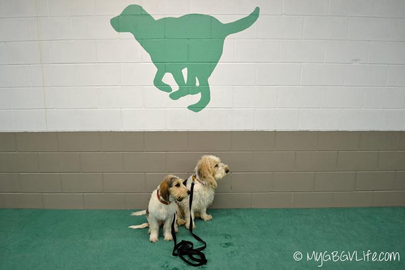 My GBGV Life at Active Dog Sports