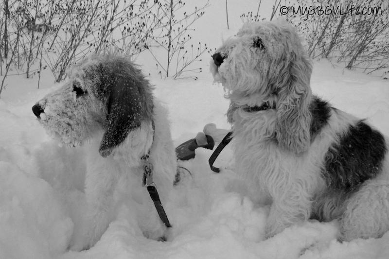 My GBGV Life Snowy Faces