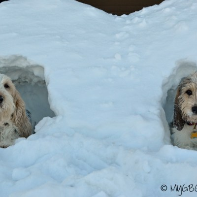 A Doggy Twinhome? | GBGV | Wordless Wednesday