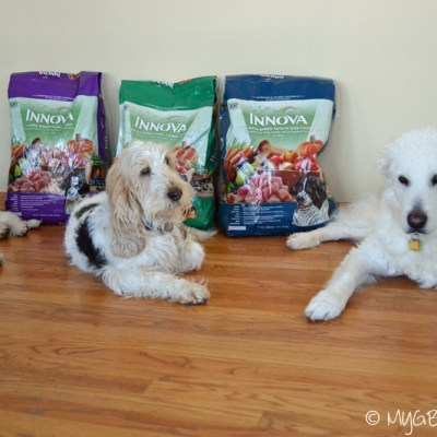 Navigating the Dog Food Forest | GBGV | Tasty Tuesday