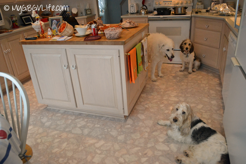 My GBGV Life dogs in the kitchen