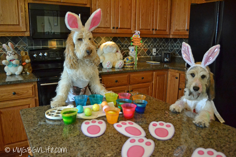 Dog Bunnies Color Easter Eggs Gbgv Monday Mischief