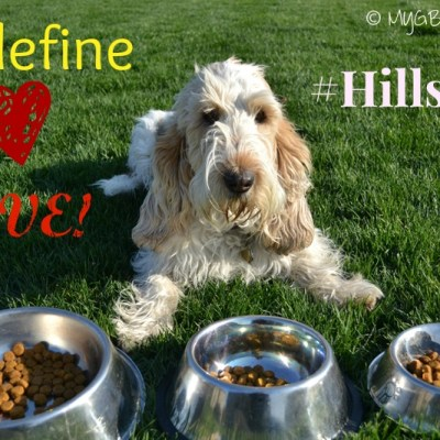How To Show Your Pet Love While Achieving Weight Loss | #HillsPet