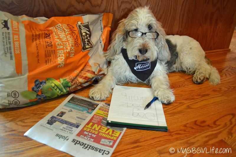 My GBGV Life #bestdogever writing a classified ad for Best Pet Parent